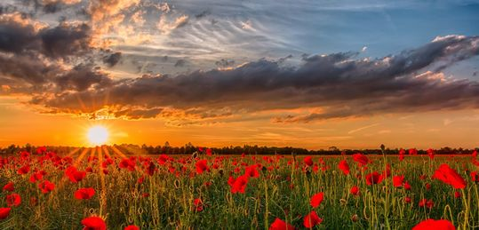 La liquidez internacional ya es una realidad - dawn-sunset-poppies-the-field-sun-nature-flower-photo-nature-landscape-sunset-sky-flowers-poppies.jpg